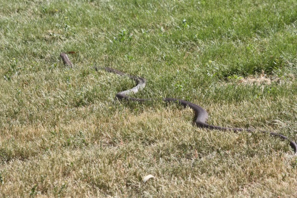 Snakes slither into Spring