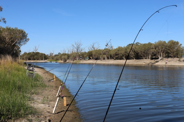 Fish released into Wimmera River