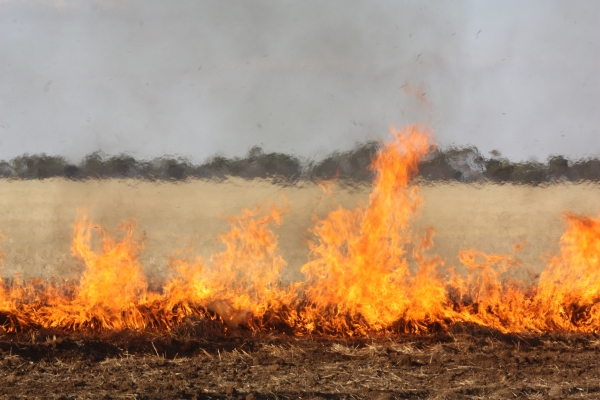 Planned burn along railway line in Dimboola