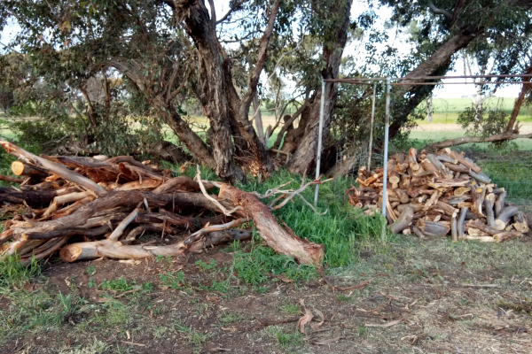 Chance to start on next winter's firewood
