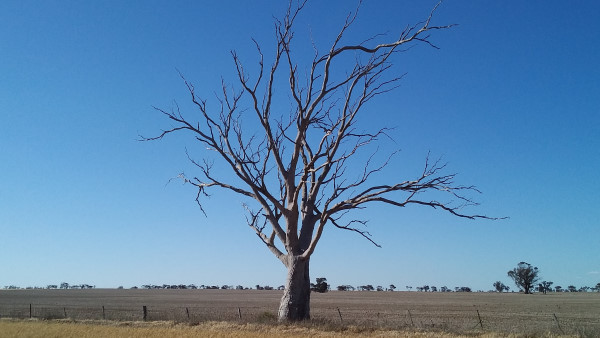 Protect paddock trees when burning stubbles